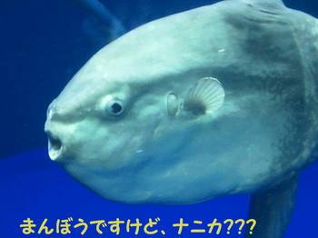 まんぼう編集DSC_5782.JPG