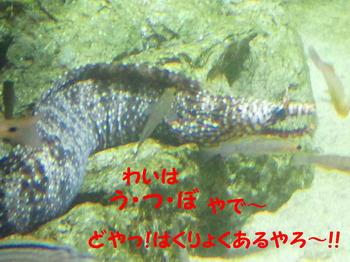 ウツボ編集②DSC_5785.JPG