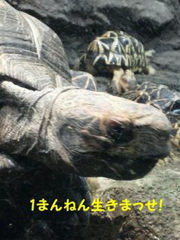カメ編集DSC_5781.JPG