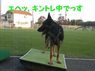キントレ中編集DSCN5629_Resize.JPG