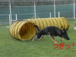 トンネル編集DSCN5610_Resize.JPG