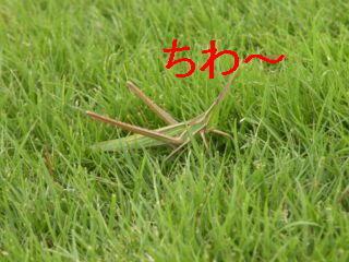 バッタ編集DSCN5691_Resize.JPG