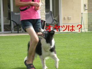 ミリ脚側DSCN5696_Resize.JPG