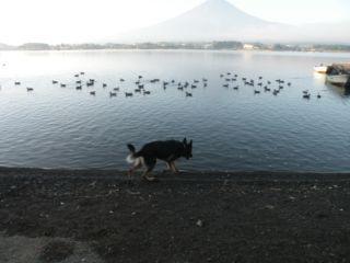 水鳥いっぱいDSCN5783_Resize.JPG