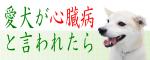犬・心臓病banner11.png