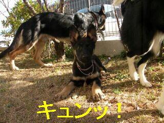 編集・チャップDSCN5124_Resize.JPG