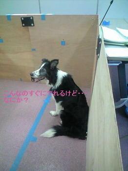 編集・ミリ・サークルCA3A0842.JPG