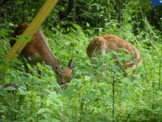 鹿・母子②DSCN5354_Resize.JPG